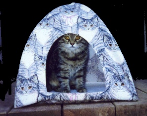 Pets Clothes u0026 Accessories / Pop-Up Small Pet Tent & Birch Steet Clothing : Pets: Clothes u0026 Accessories / Pop-Up Small ...